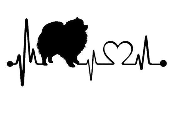Pomeranian Aufkleber Heartbeat